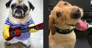 These Rockstar Dogs on Guitar Will Brighten Up Your Day (Photos)