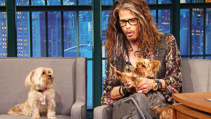 Steven Tyler's Dogs Crash His Interview And Steal The Show—This Is Hilarious! | I Love Classic Rock Videos