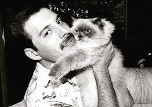 20 Photos Of Freddie Mercury and His Cats In The Best of Times
