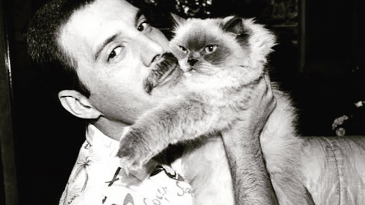 20 Photos Of Freddie Mercury and His Cats In The Best of Times | I Love Classic Rock Videos